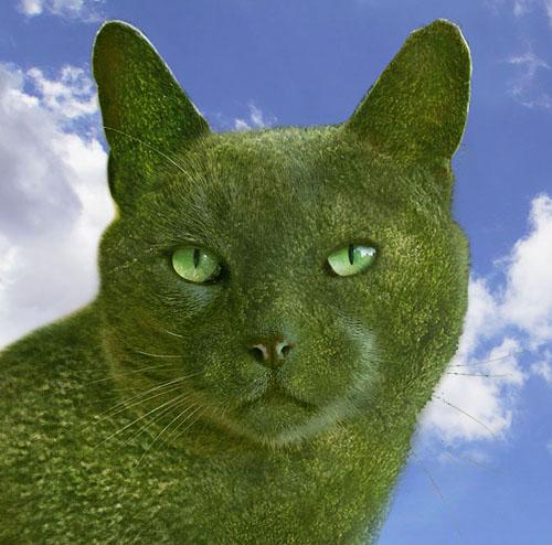 Топиари профиль кошки пос